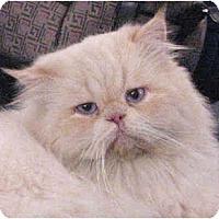 Adopt A Pet :: Sailor - Davis, CA