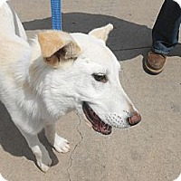 Adopt A Pet :: Simba - Arenas Valley, NM