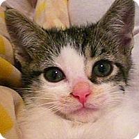 Adopt A Pet :: Laredo - Narberth, PA