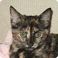 Adopt A Pet :: FOXY - Hamilton, NJ