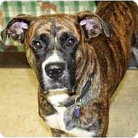 Adopt A Pet :: Justin - Racine, WI