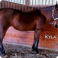 Adopt A Pet :: Kyla - Elverta, CA