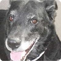 Adopt A Pet :: Ginny - Newport, VT