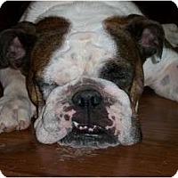 Adopt A Pet :: Ruby Tuesday - Cibolo, TX