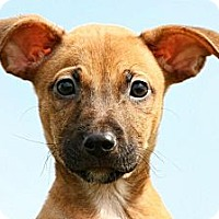 Adopt A Pet :: *Billy - PENDING - Westport, CT