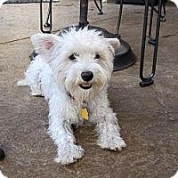 Adopt A Pet :: Kira - Carrollton, TX