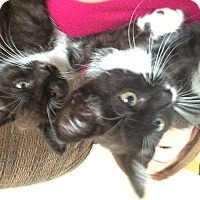 Adopt A Pet :: Ivy and Mya - Troy, OH