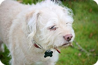 Terrier (Unknown Type, Small) Mix Dog for adoption in Sheridan, Oregon - Dale