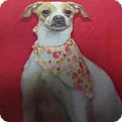 Adopt A Pet :: Dobby