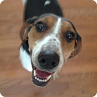 Adopt A Pet :: Ruthie*Foster needed!* - Chicago, IL