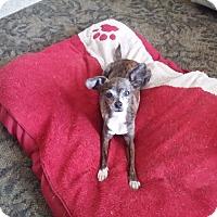 Adopt A Pet :: Celeste - S. Pasedena, FL