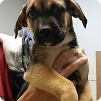 Adopt A Pet :: Tina ~ Adoption Pending - Youngstown, OH