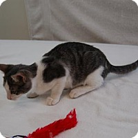 Adopt A Pet :: Trudy - Harrisonburg, VA