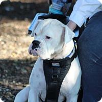 Adopt A Pet :: Bertie - Austin, TX