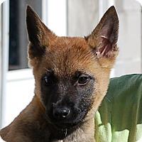 Adopt A Pet :: Jessie AD 01-23-16 - Preston, CT
