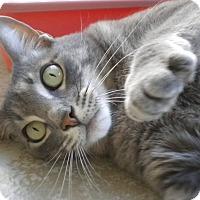 Adopt A Pet :: Mercury - Umatilla, FL