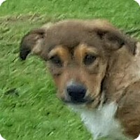 Adopt A Pet :: Katie (HAS BEEN ADOPTED) - Buffalo, NY