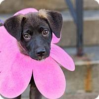 Adopt A Pet :: Tishka - Rochester, NY