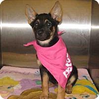 Adopt A Pet :: *ARIEL - Norco, CA