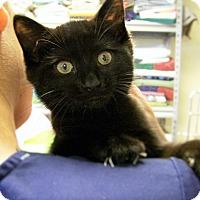 Adopt A Pet :: Charlotte - Toledo, OH