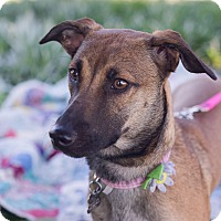 Adopt A Pet :: Keeley - Oakley, CA