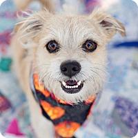 Adopt A Pet :: Nelson - Oakley, CA