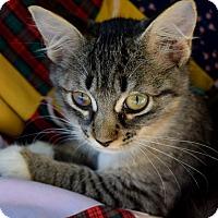 Adopt A Pet :: Ciel - Summerville, SC