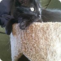 Adopt A Pet :: Blackie - Loveland, CO