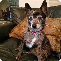 Adopt A Pet :: Juliette - Walker, LA