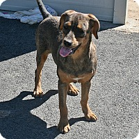 Adopt A Pet :: Crimson - Beebe, AR