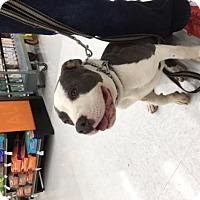 Adopt A Pet :: Dave - San Pedro, CA