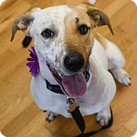 Adopt A Pet :: Mara - Hagerstown, MD
