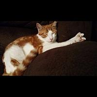 Adopt A Pet :: Spock - Louisville, KY