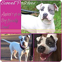 Adopt A Pet :: Sweet Patches - Colmar, PA