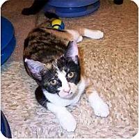 Adopt A Pet :: Piper - Irvine, CA