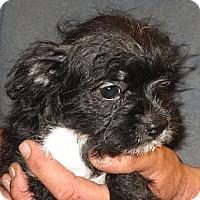 Adopt A Pet :: Cambry - Salem, NH