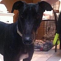 Adopt A Pet :: Q - Pearl River, LA