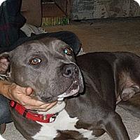 Adopt A Pet :: Magnum - San Diego, CA