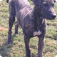 Adopt A Pet :: Eddie - Byhalia, MS