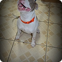 Adopt A Pet :: Crash - Miami, FL