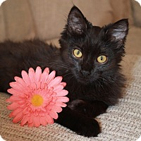 Adopt A Pet :: Mistletoe - Clearfield, UT
