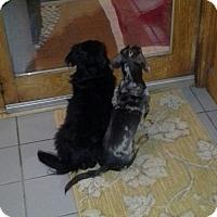 Adopt A Pet :: Duke - Charlestown, RI