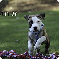 Adopt A Pet :: Patch - Alpharetta, GA