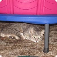 Adopt A Pet :: Bobbie - Modesto, CA