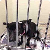Adopt A Pet :: ZEEBEE - Bakersfield, CA