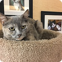Adopt A Pet :: Honey - Riverside, CA