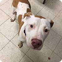 Adopt A Pet :: Elliot - Cleveland, OH