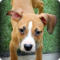 Adopt A Pet :: Marino - Ft. Lauderdale, FL