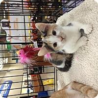 Adopt A Pet :: Caroline - Wilmore, KY