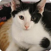 Adopt A Pet :: Roger - Medina, OH